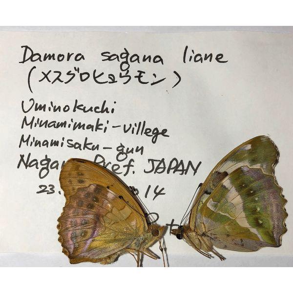 DAMORA SAGANA LIANE***pair**** JAPAN(unmounted,papered)