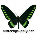 ButterflySupply
