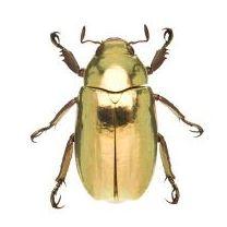 Limmer Entomologica